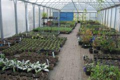 Ayurveda nursery