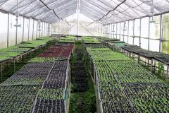 Ayurvedic nursery